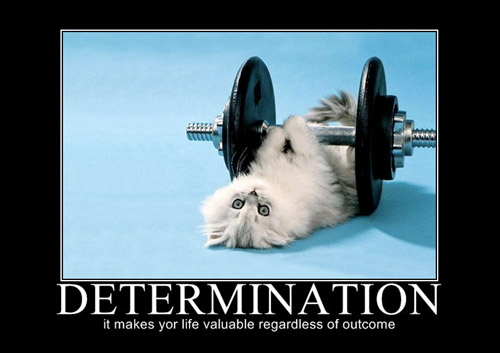 Determination - hey it's cute, and I can put whatever pictures I want =p #kitty #fit