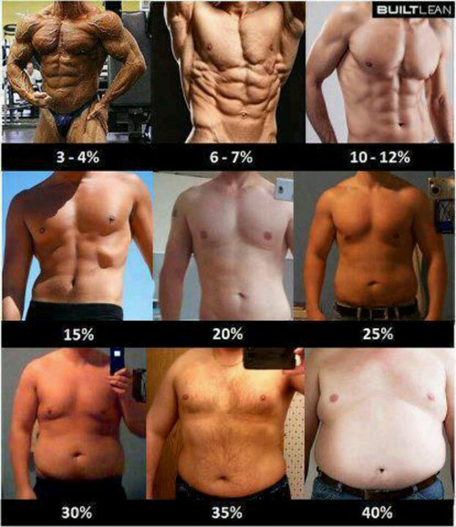 What's your body fat percentage?